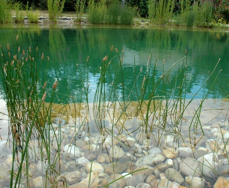 Teich, Wasserpflanzen