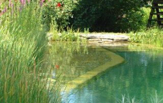 Teich, Gewässer