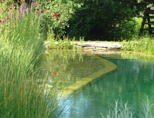 Frühjahrsputz im Schwimmteich