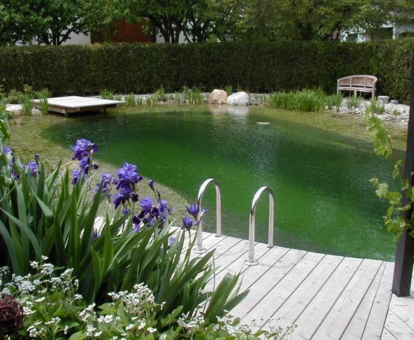 Wasser im Garten, Teich