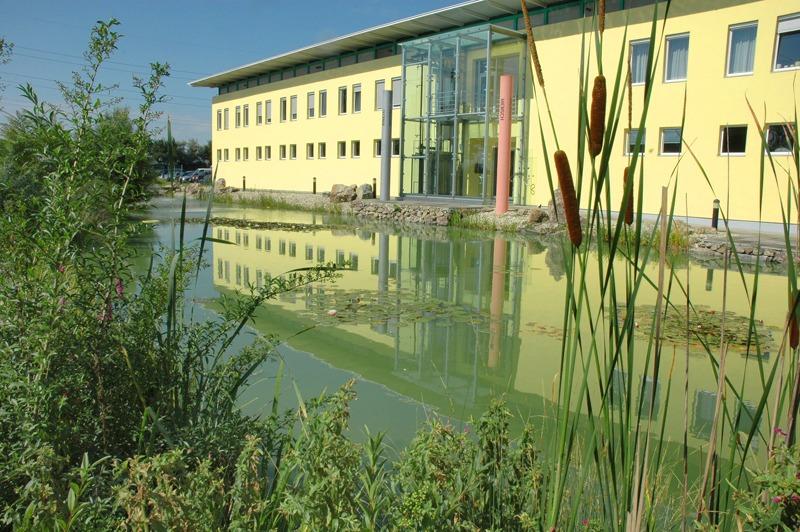 Teich, Schilf, Pflanzen