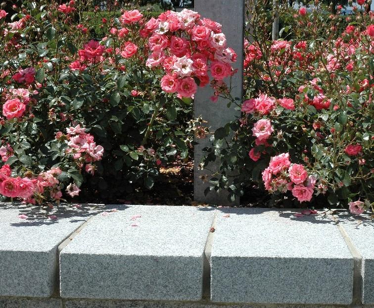 Blumen, Pflanzbeete