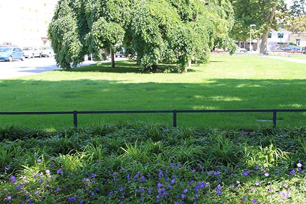 Park, Rasenfläche, Blumenbeet