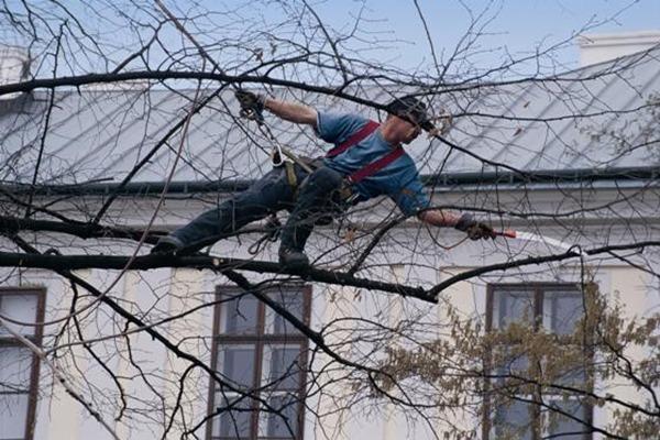 Baumpflege,