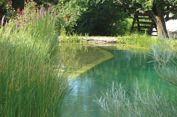 Teich, Gewässer, Naturteich