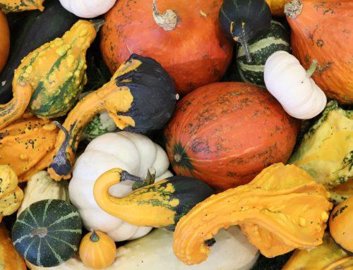 Vom Spätsommer zum Frühherbst –  Tipps für einen erfolgreichen Herbststart im Garten