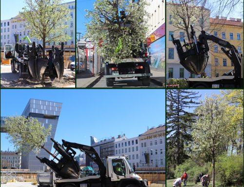 Aktuell: Großbaumverpflanzung